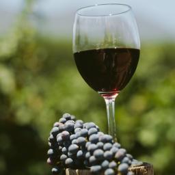 Nederlandse wijn wordt nooit concurrentie voor 'echte wijnlanden'