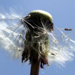 Kans op hoge pollenaantallen in voorjaar 2015