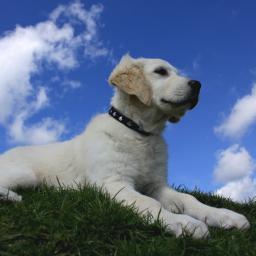 Saks Fifth Avenue valt over naam hondenvoeding